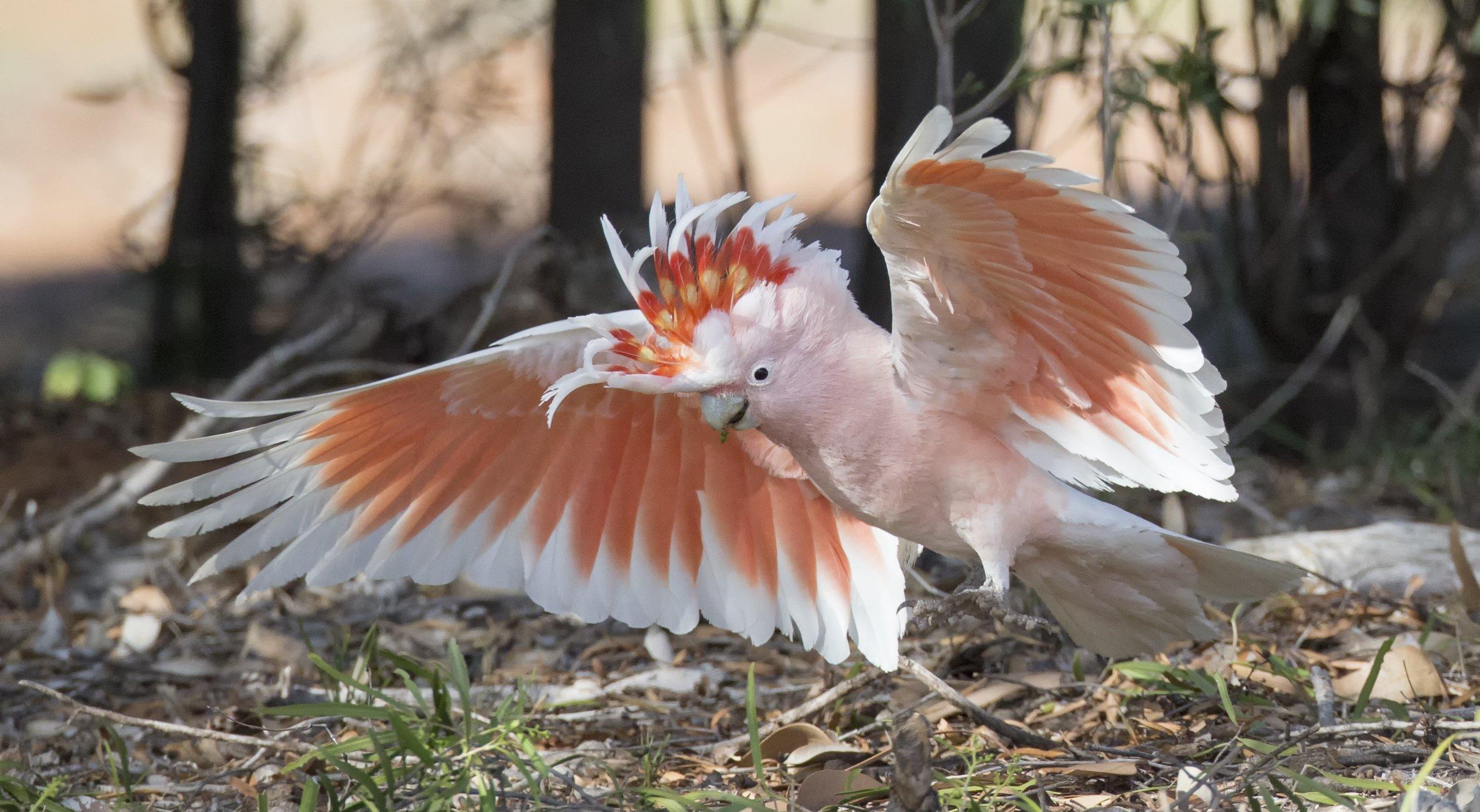 Pictures of birds in flight