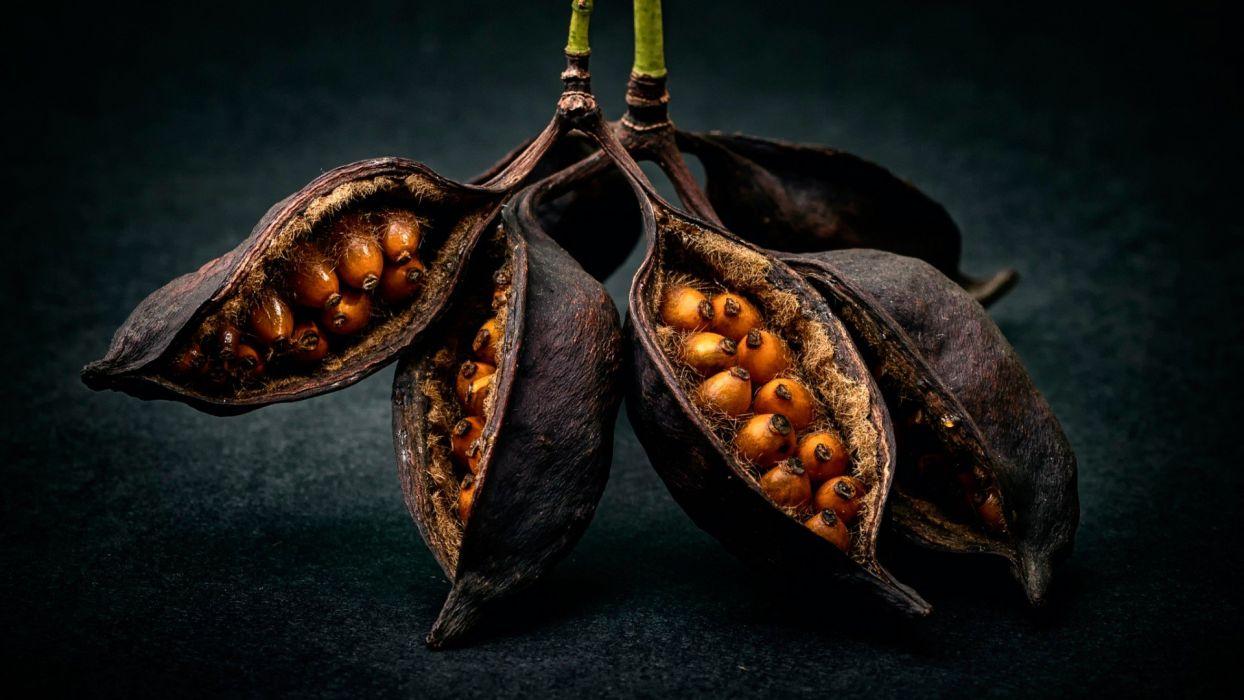 seeds pods wallpaper