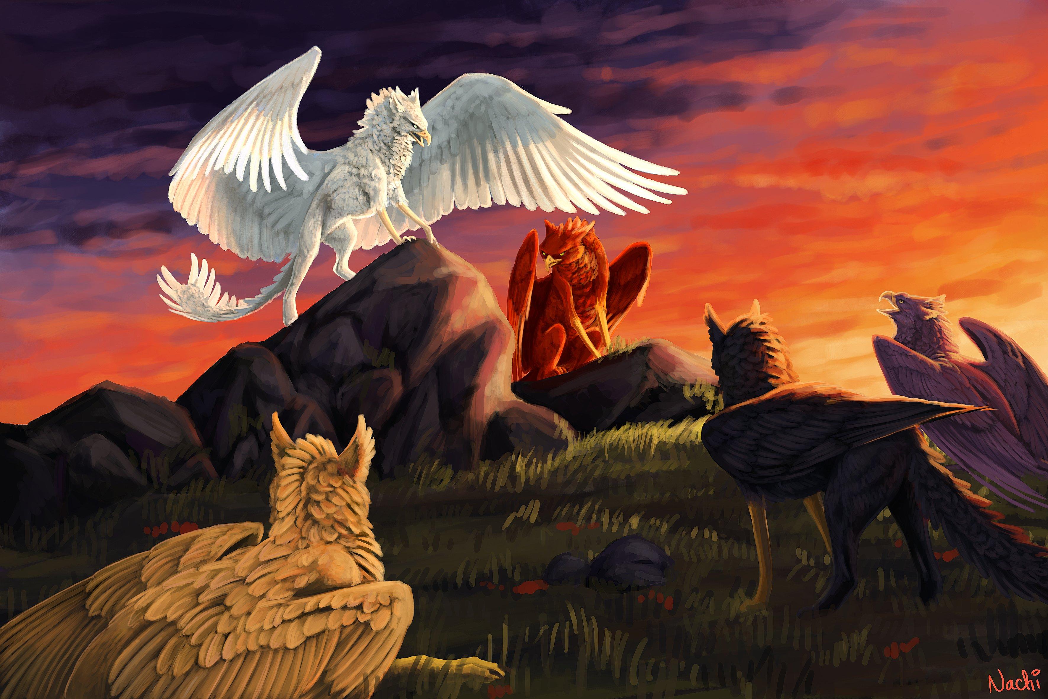 fantasy art artwork griffin creature bird f wallpaper