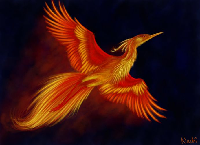 fantasy art artwork pheonix bird creature d wallpaper