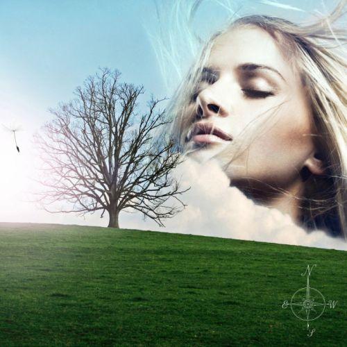 wind surreal dandelion angel wish hill tree cloud wallpaper