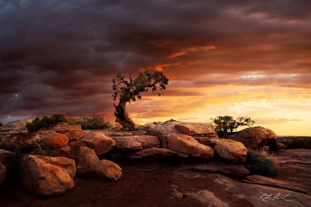Dead Horse State Park Boulders Rock Moab Tree Lonely Tree Sunrise Juniper Utah wallpaper