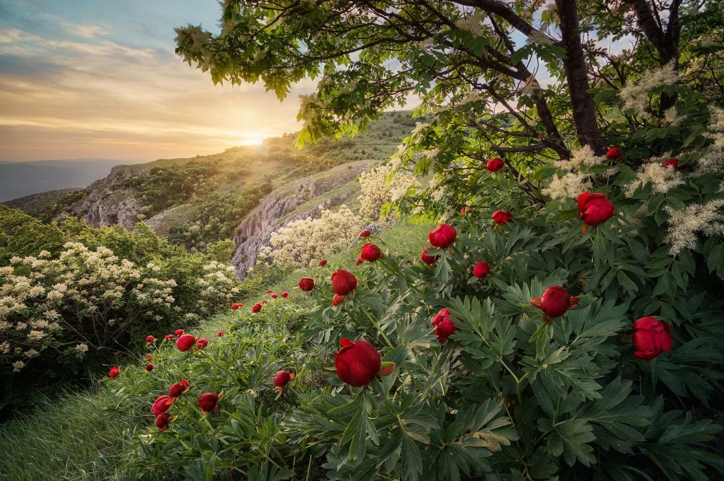 Forest Spring Mountain Bulgaria Sunset Peony wallpaper