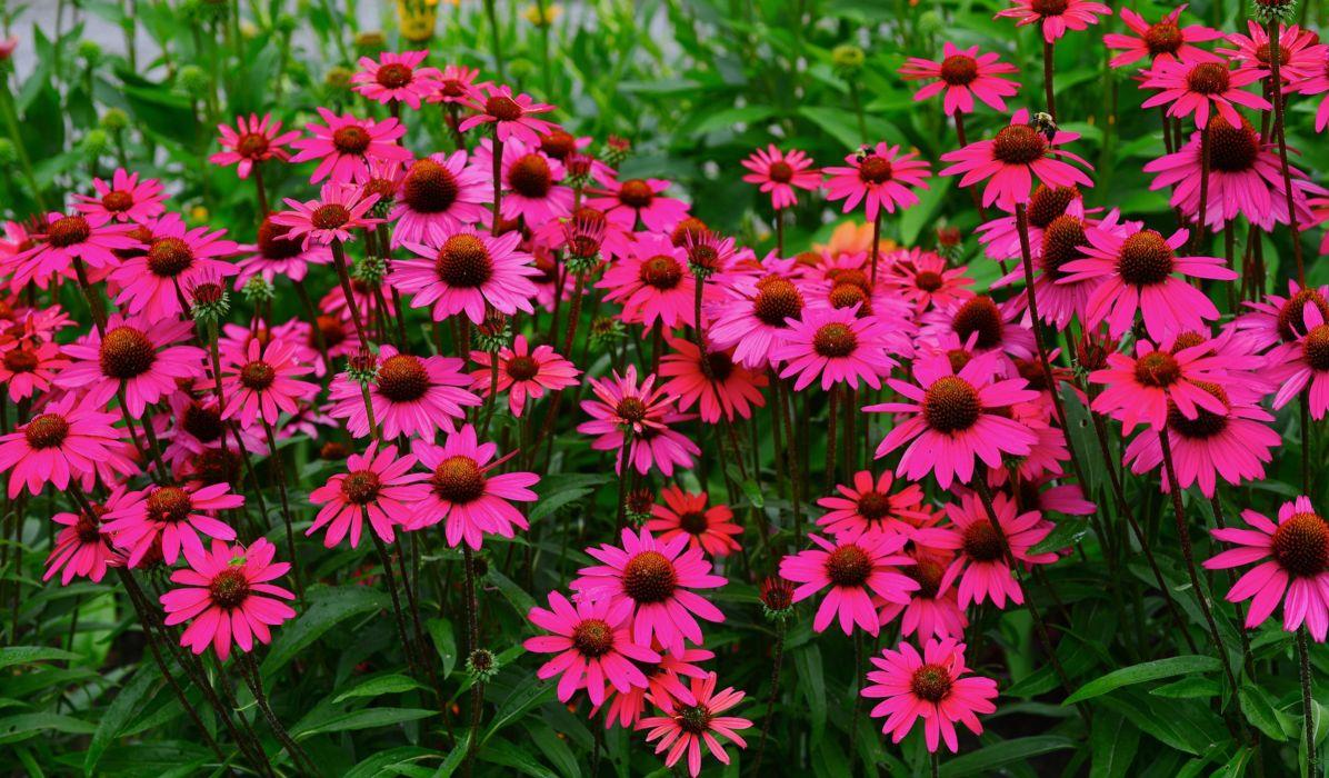 Flower Garden Rose Nature Earth Landscape Spring wallpaper