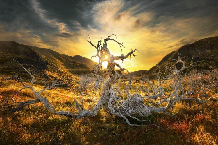 Landscape Hill Dead Tree Patagonia Chile Tree Sunrise Sun wallpaper