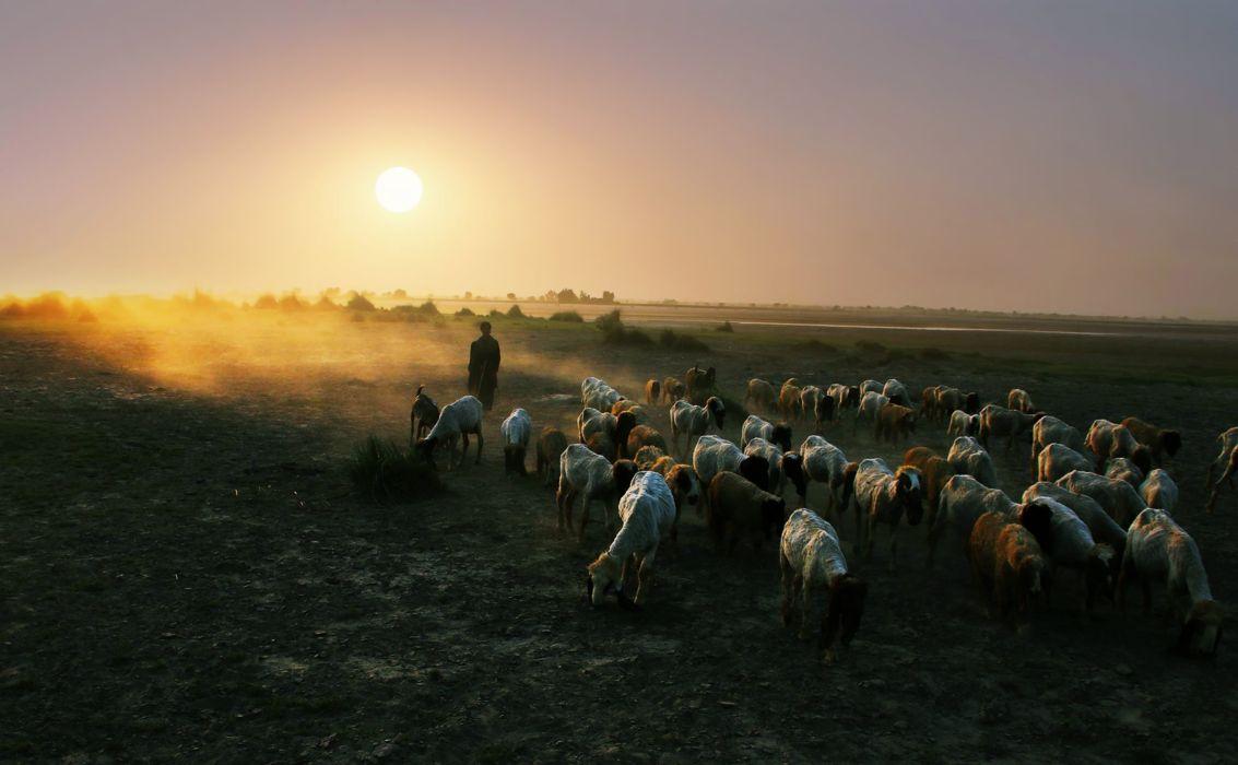 Sunset Nature Sheep Shepherd Earth Countryside Landscape People Wallpaper