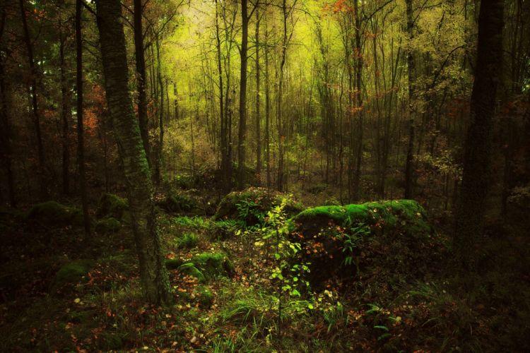 Moss Tree Forest Nature wallpaper