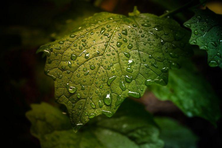 Water Drop Leaf Nature drops rain bokeh wallpaper