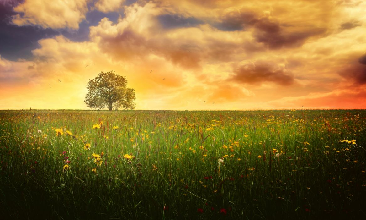 Lonely Tree Landscape Evening Cloud Flower Meadow Spring Nature Tree wallpaper