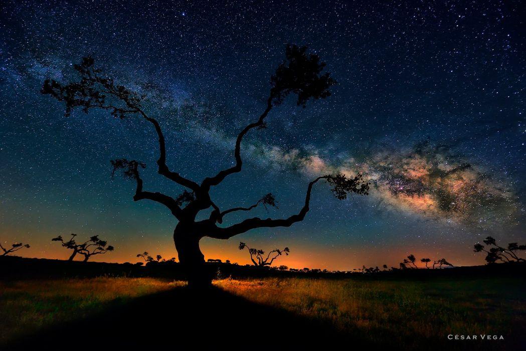 Glow Shadow Exposure Night Milky Way Tree Landscape stars space sky wallpaper