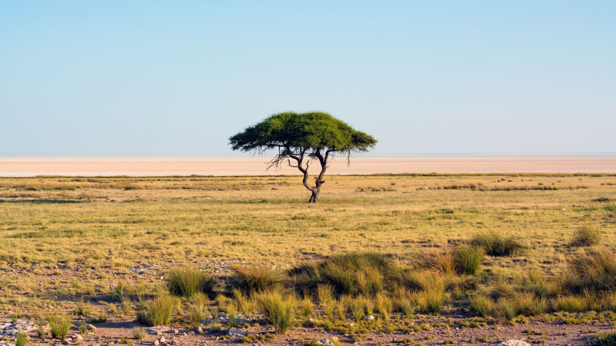 Lonely Tree Landscape Nature Savannah wallpaper