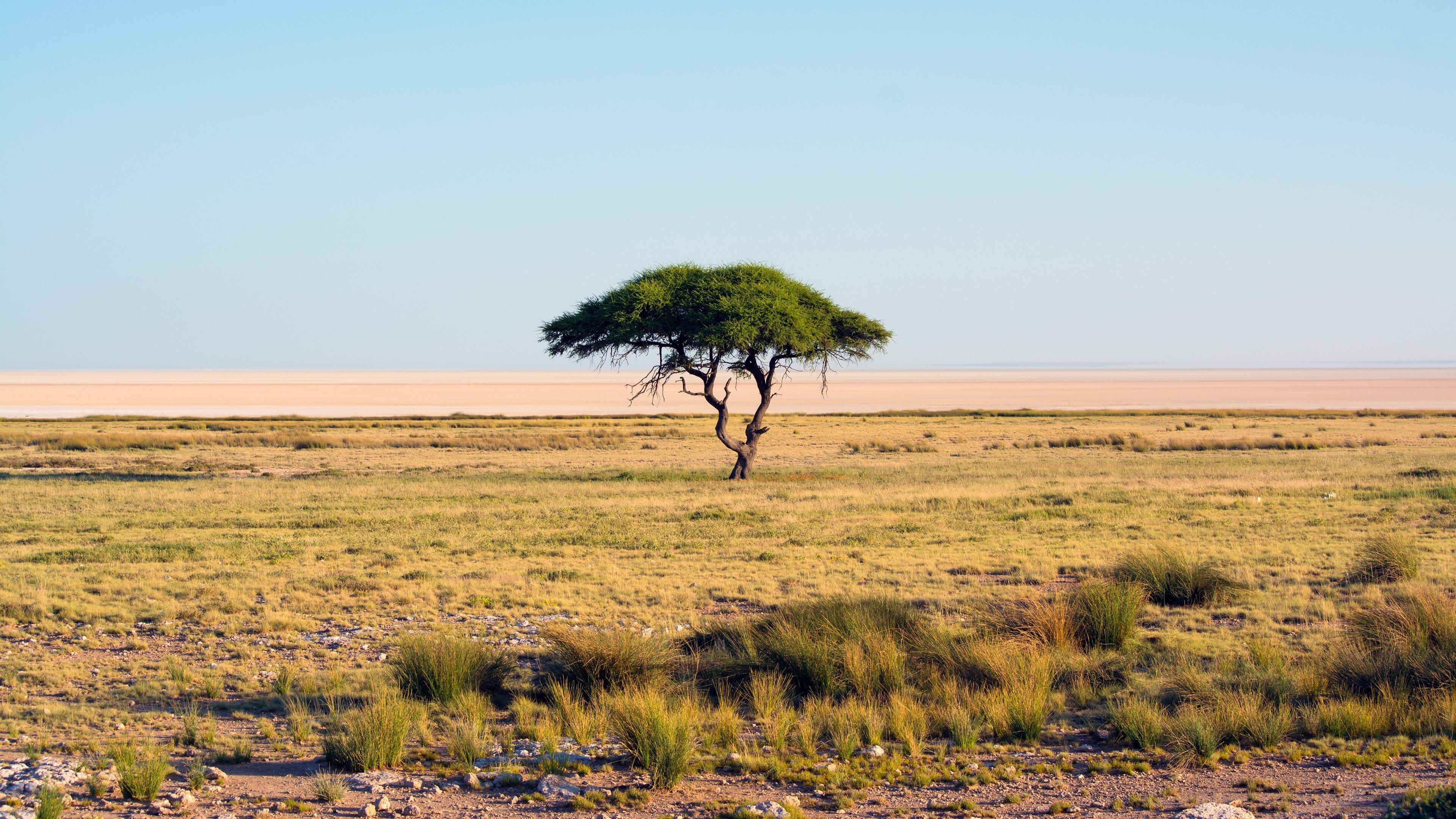 Lonely Tree Landscape Nature Savannah Wallpaper