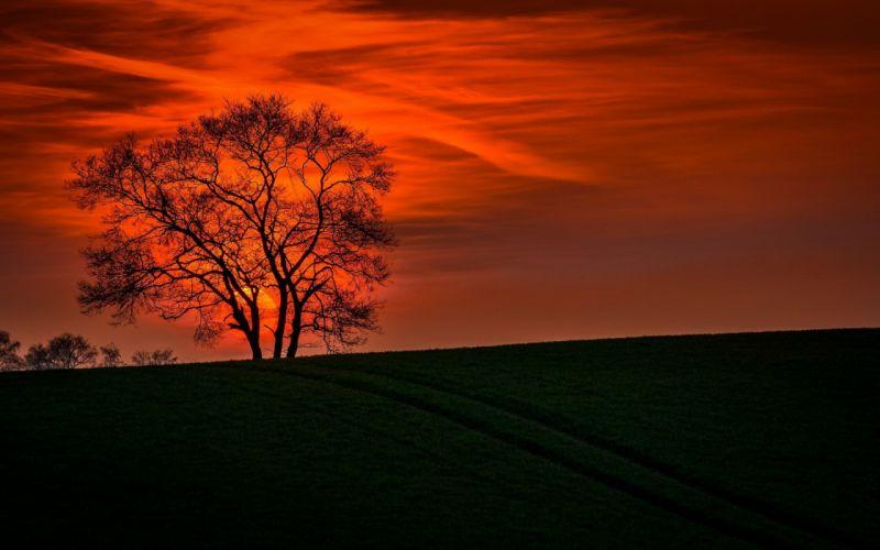 Lonely Tree Orange Cloud Sunset Landscape Nature wallpaper