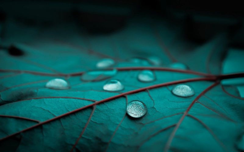 rain drops leaf leaves bokeh macro wallpaper