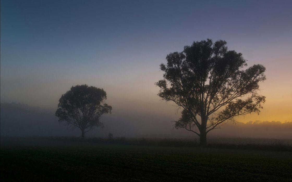 nature tree lonely landscape fog wallpaper