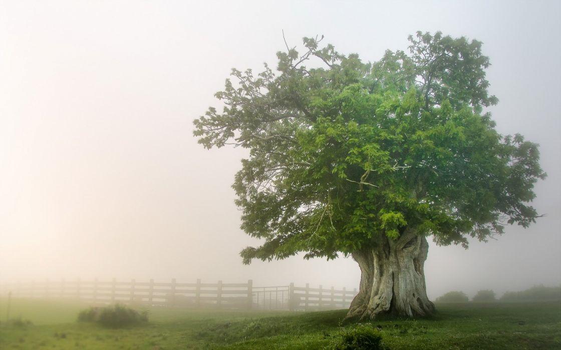 tree fog mist nature landscape fence wallpaper