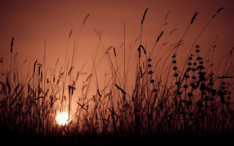 grass sunset sunrise bokeh nature landscape wallpaper