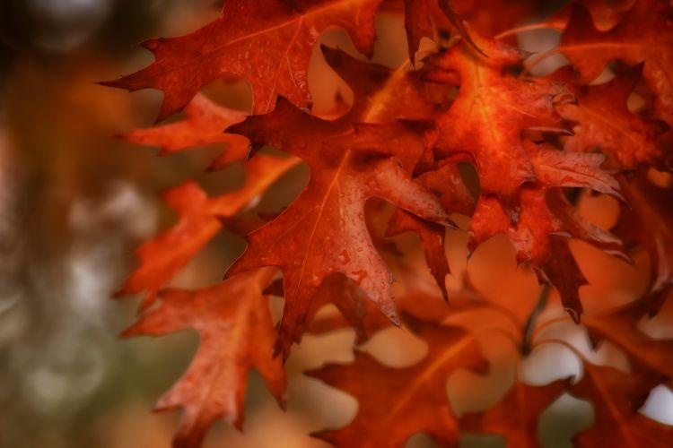 Bokeh Dew Autumn Macro Leaf drops wallpaper
