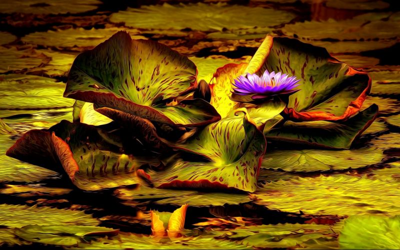 Art Painting Pond Leaf Flower Water Lily Lily wallpaper