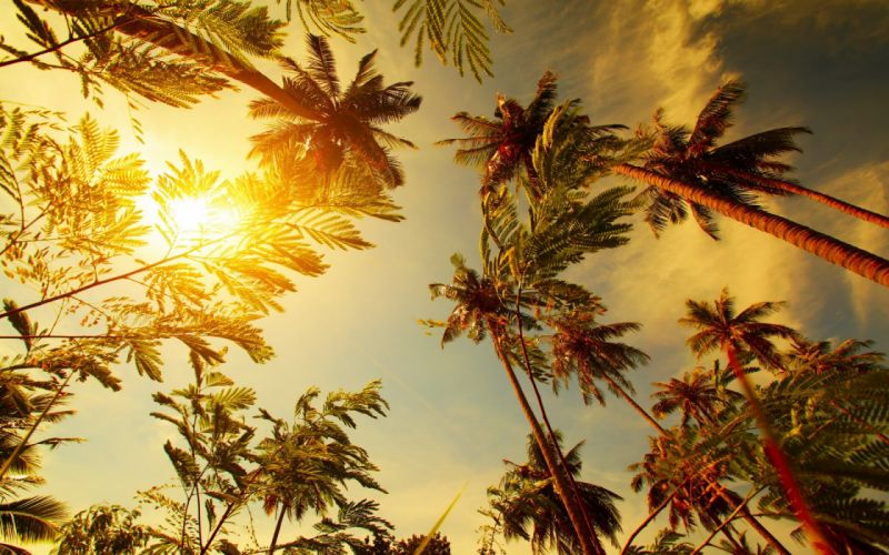 Palm leaf leaves sun sunst tropical wallpaper