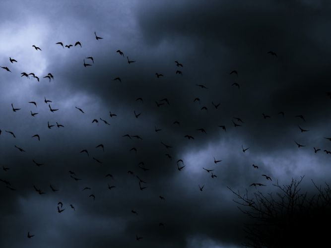 Dark Nature Bird Sky Clouds flock mood wallpaper