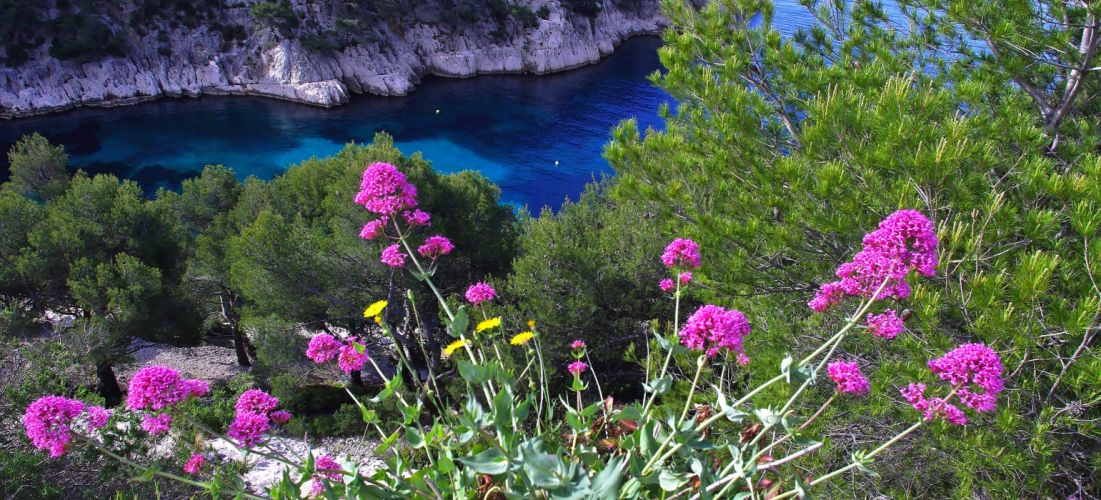 Flower Coast Calanque Cote Dazure France Seashore ocean sea wallpaper