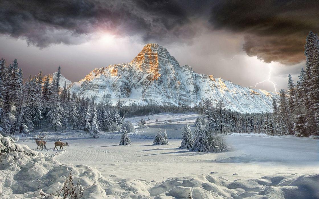 Mount Chephren Canadian Rockies Vally Winter Landscape Forest Cloud Mountain deer wallpaper