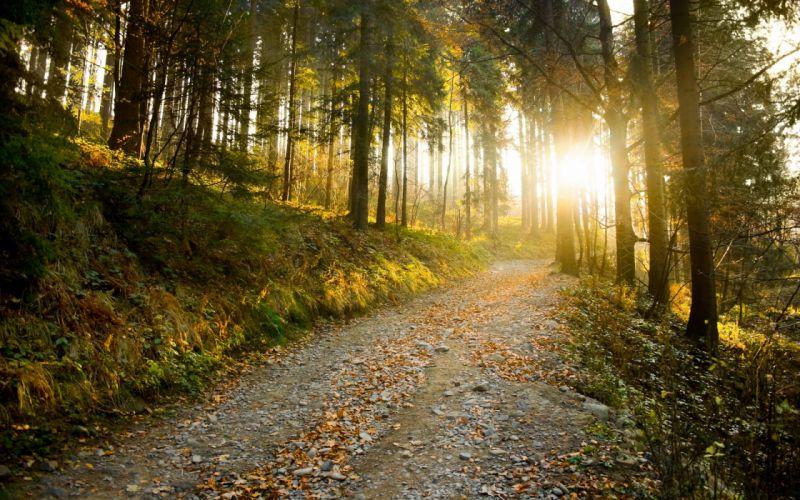 Sunbeam sun sunlight forest tree path trail sunrise sunset wallpaper