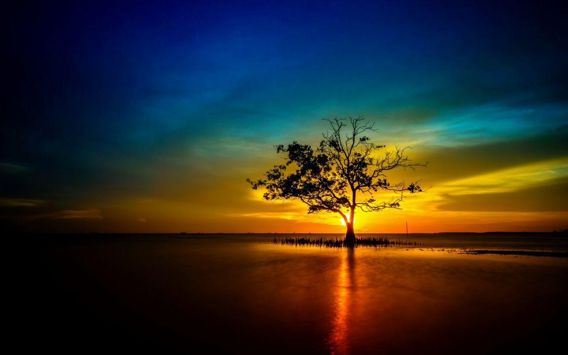 Tree lonely sunset sunrise landscape nature sun reflection wallpaper