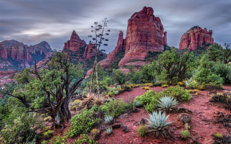 Cactus flower bokeh desert plant nature landscape hh wallpaper