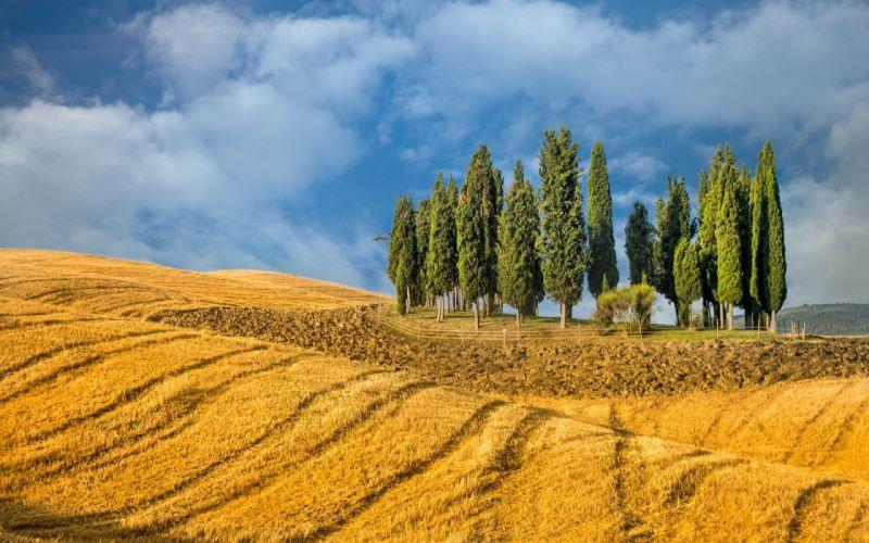 Landscape nature tree farm field wallpaper