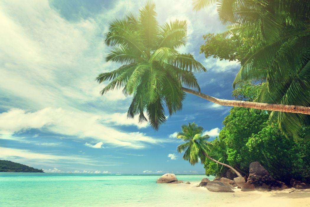 Beach palm beach ocean sea tropical sky clouds wallpaper