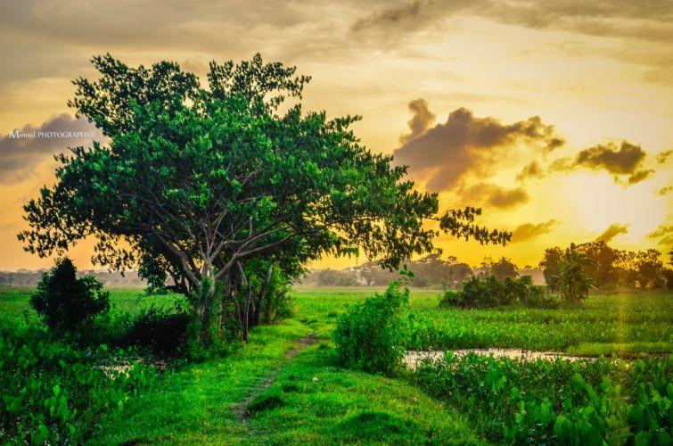 Field Sunset Tree Landscape wallpaper