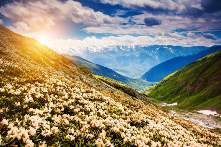 Flower mountains landscape nature wallpaper