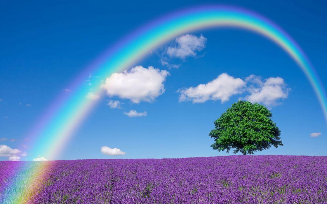 Lavender Nature Tree Lonely Tree Field Rainbow wallpaper