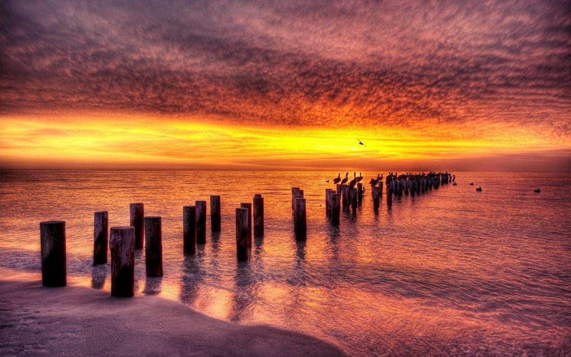 Nature Landscape Beach Ocean Sea Bird Cloud Sunset wallpaper