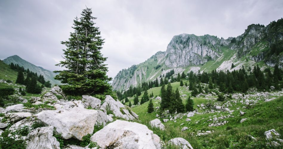 Nature Mountain Rock Tree Landscape wallpaper