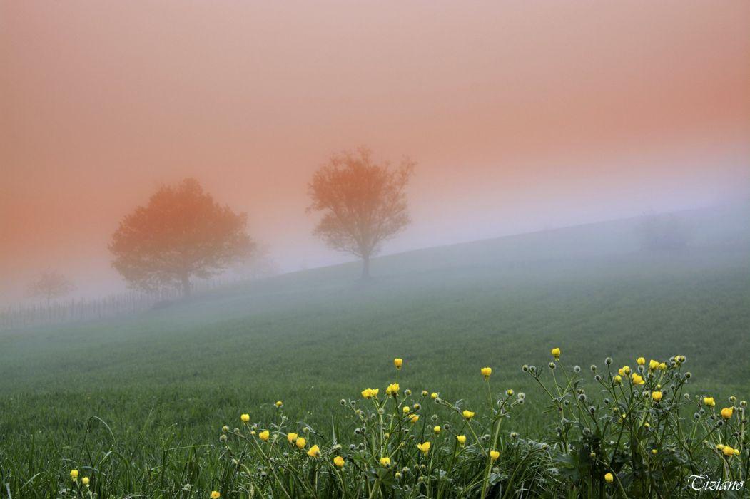 Tree Fog Landscape Nature Spring wallpaper