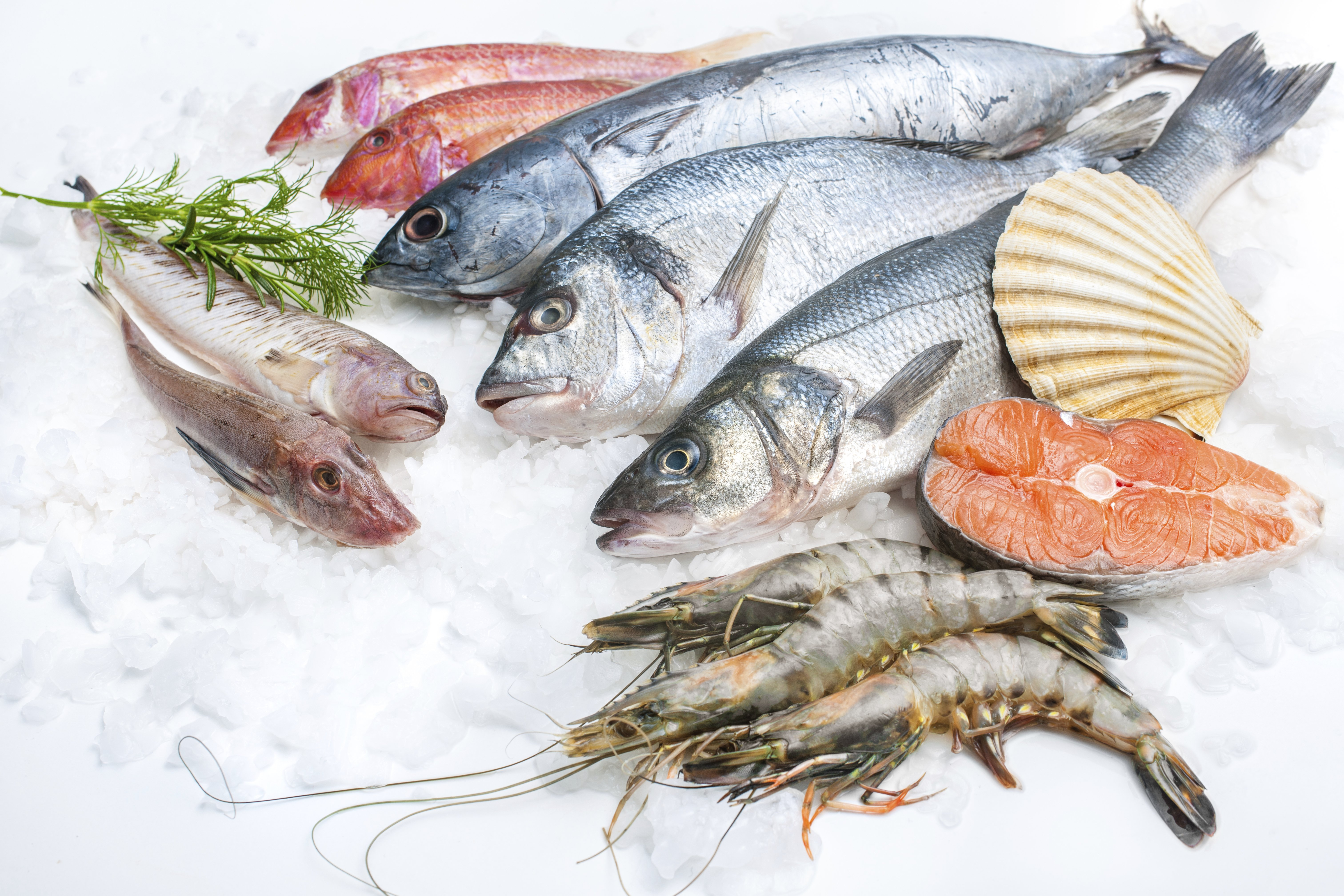 Seafood food fish sea ocean wallpaper 6048x4032 722640 for What is fish food made of