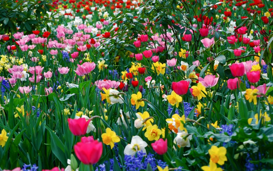 Beauty Flower Nature Spring Flowers Field Wallpaper 2560x1600