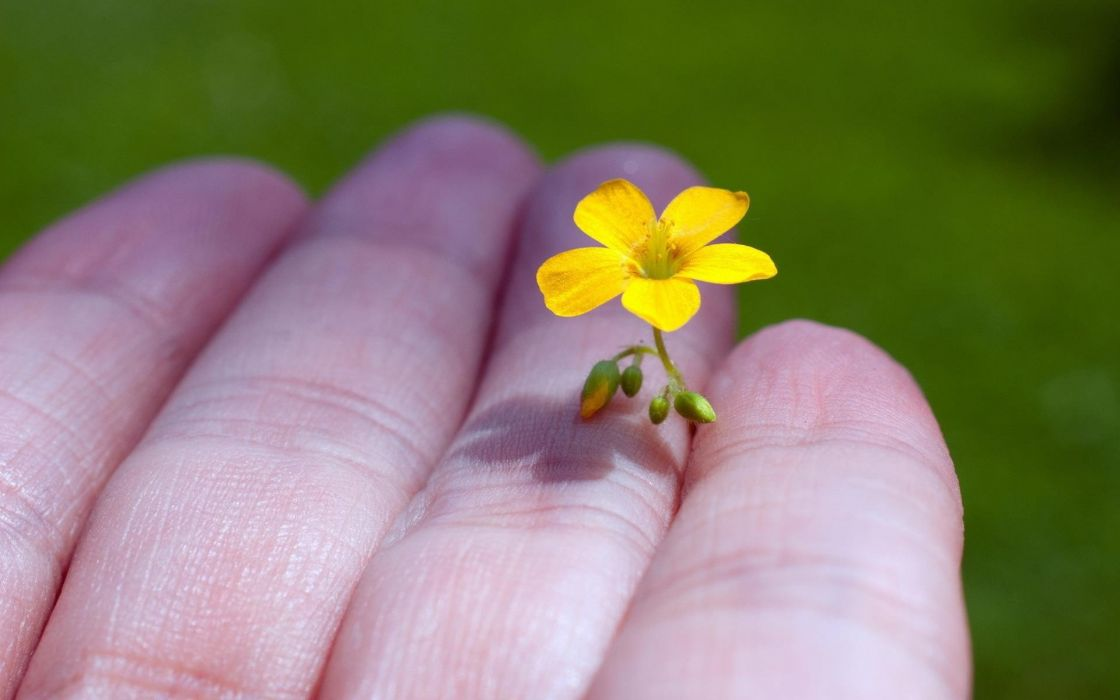Beauty flower nature little yellow flower hand wallpaper 1920x1200 beauty flower nature little yellow flower hand wallpaper mightylinksfo
