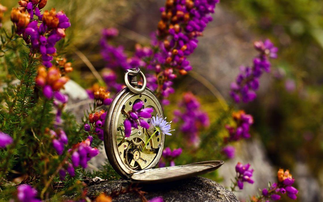 Broken Pocket Watch Flowers wallpaper
