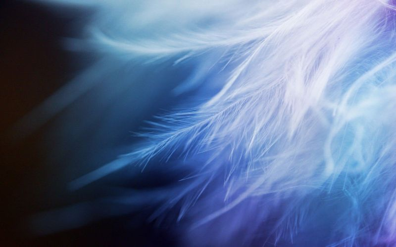 White Feather Closeup wallpaper