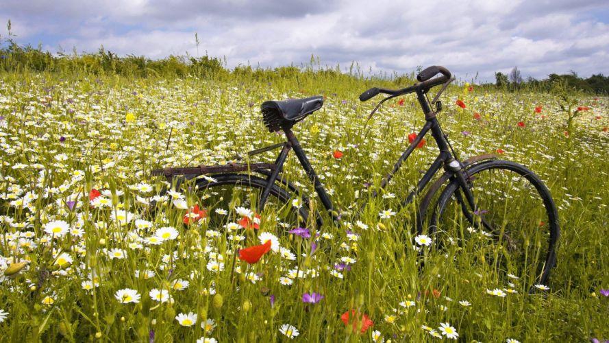 Wildflower Ride flower nature wallpaper