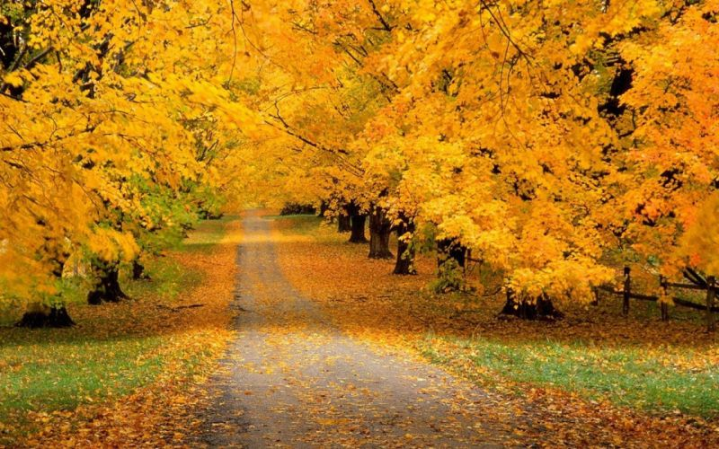 Trees Park Autumn Leaves Yellow Track wallpaper