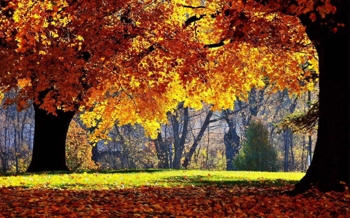 Autumn Trees Leaves Park Yellow Shadow wallpaper