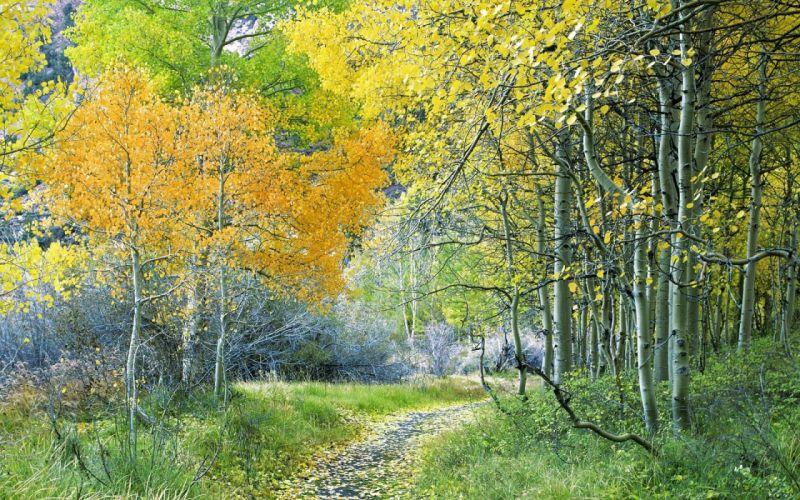 Track Trees Wood Autumn Turn Leaves wallpaper