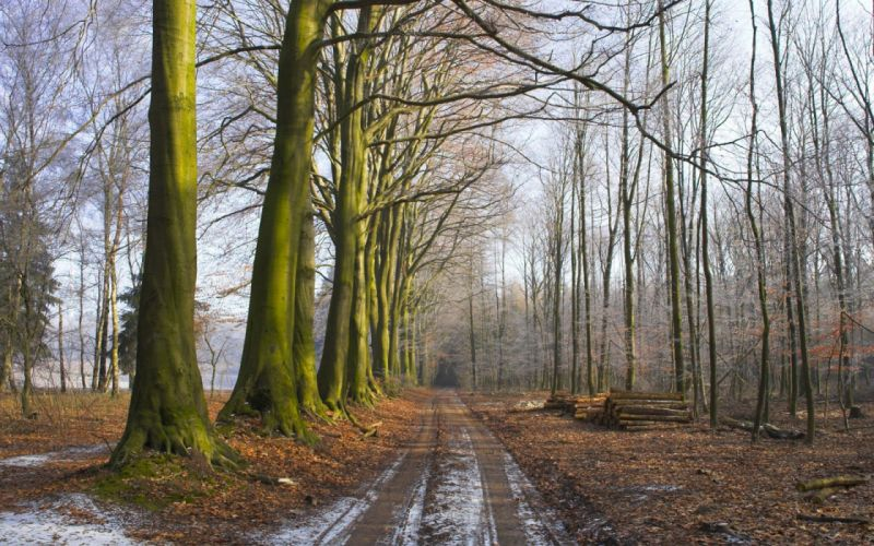 Wood Trees Earth Grass Fog Freshness Morning Logs Road wallpaper