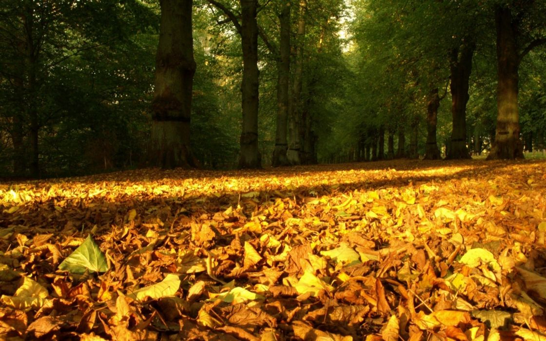 Leaves Yellow Dry Wood Trees Earth Autumn wallpaper