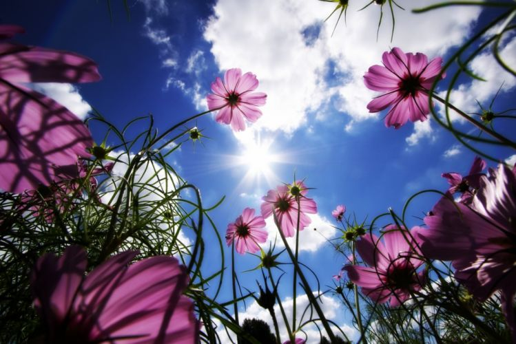 Flowers Meadow Beams Sky Sun Clouds wallpaper
